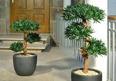 plante interieur sombre